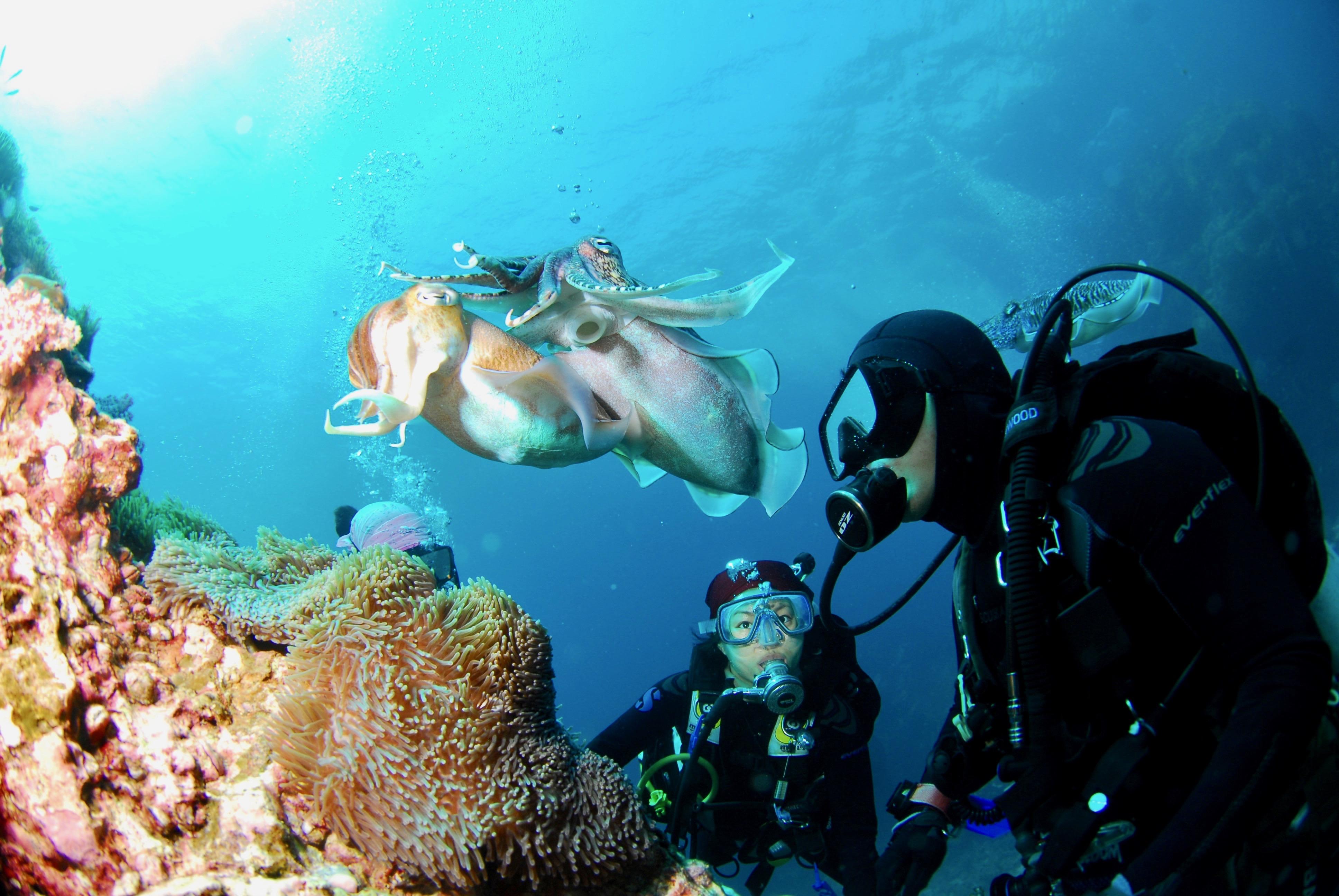 Dos buceadores observando calamares gigantes cerca de una formación rocosa