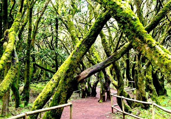 Explore the forest of Garajonay National Park