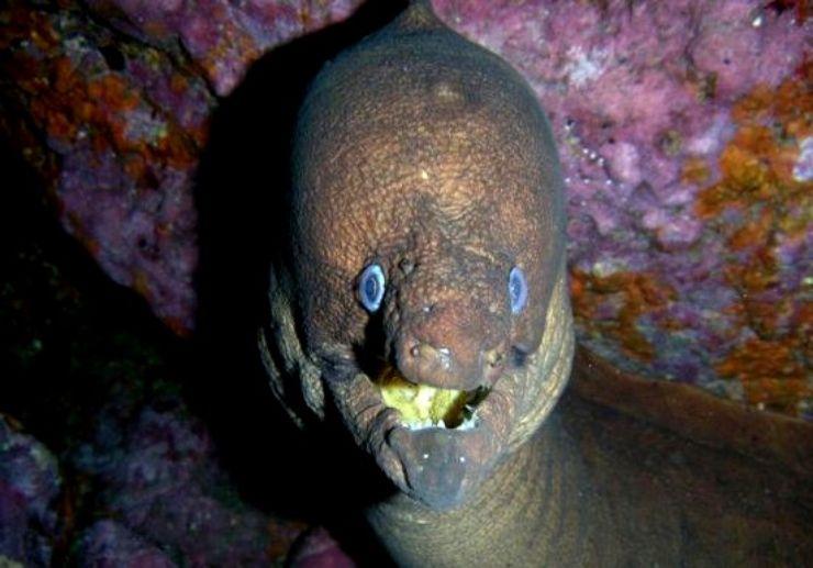 Puerto de la Cruz  diving and marine life