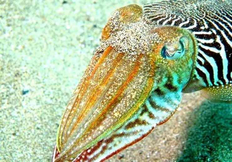 Marine life in Lanzarote underwater