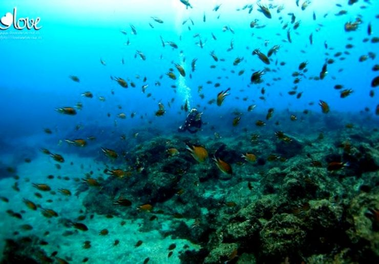 Guided scuba diving in Tenerife