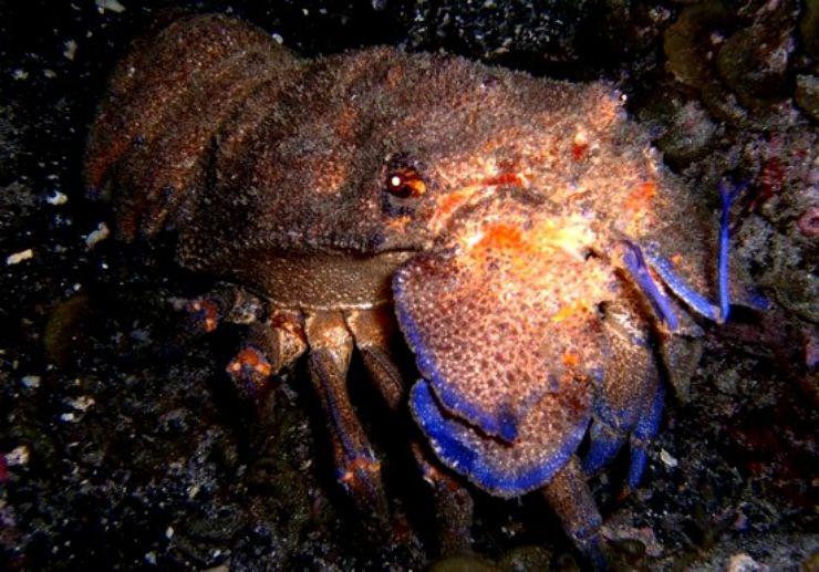 Underwater creature in Tenerife diving