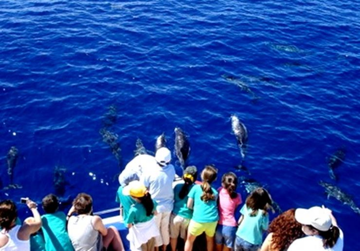 Spot whales and dolphins in La Palma