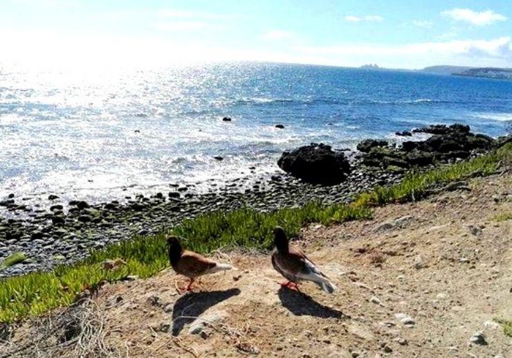Coastal view of Meloneras and Maspalomas