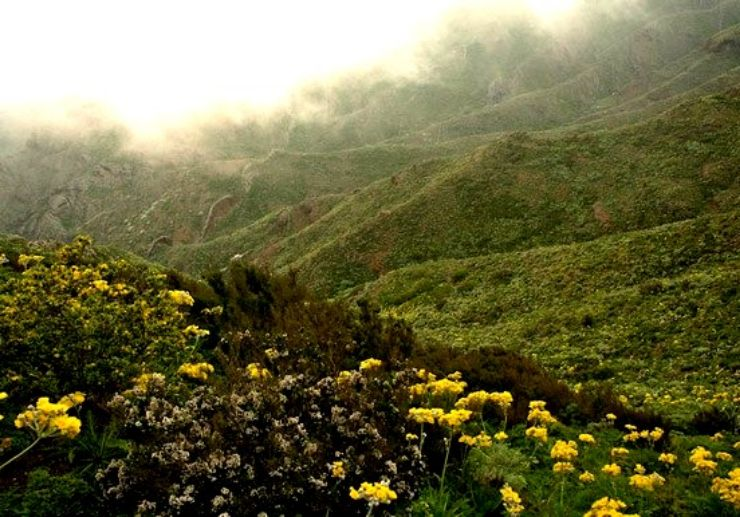 hiking tour in Teno Tenerife