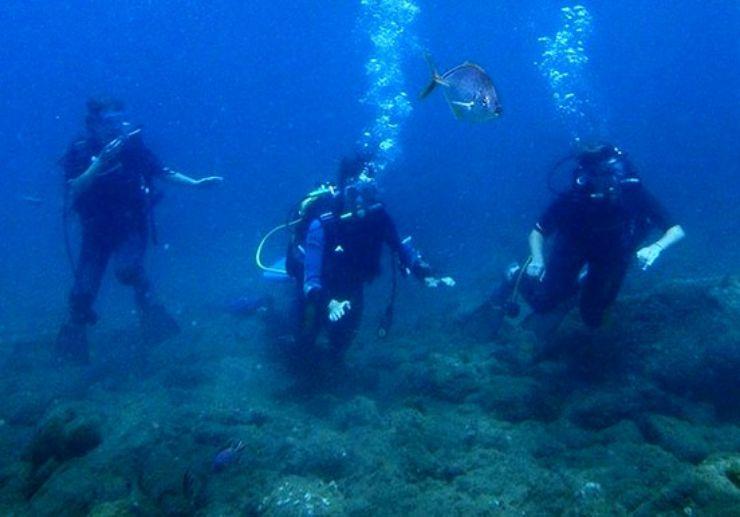 Diving taster in Tenerife