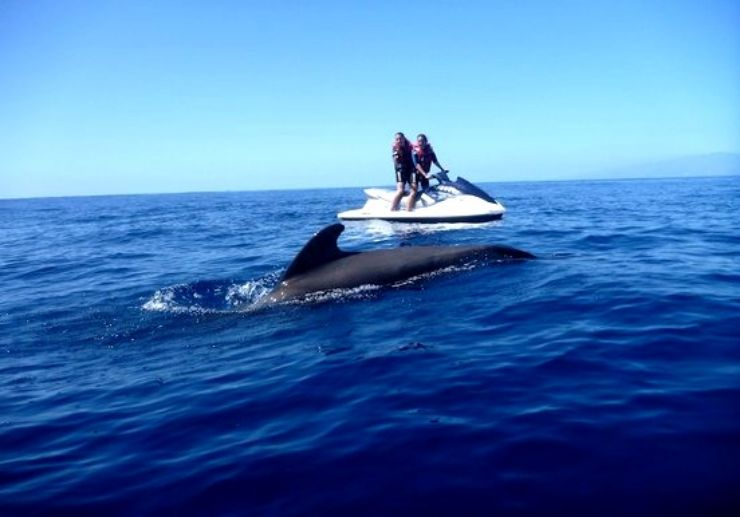 spot a dolphin on jet ski safari