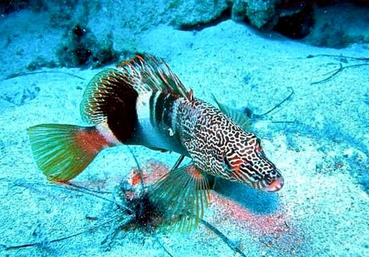 Discover marine life with scuba diving in Lanzarote
