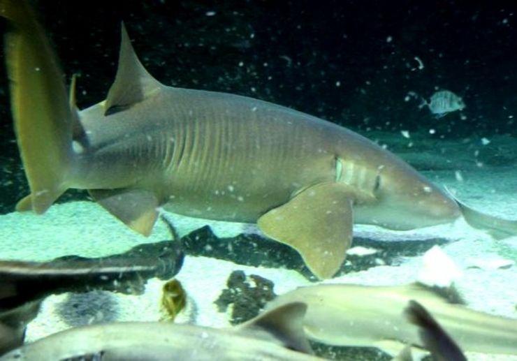 Shark diving in Aquarium of Lanzarote