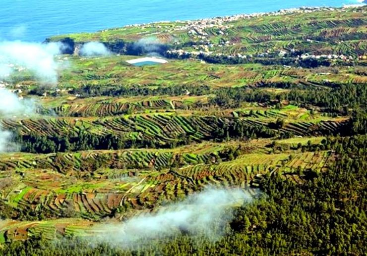 Terraces of lush green lanscape of Tenerife